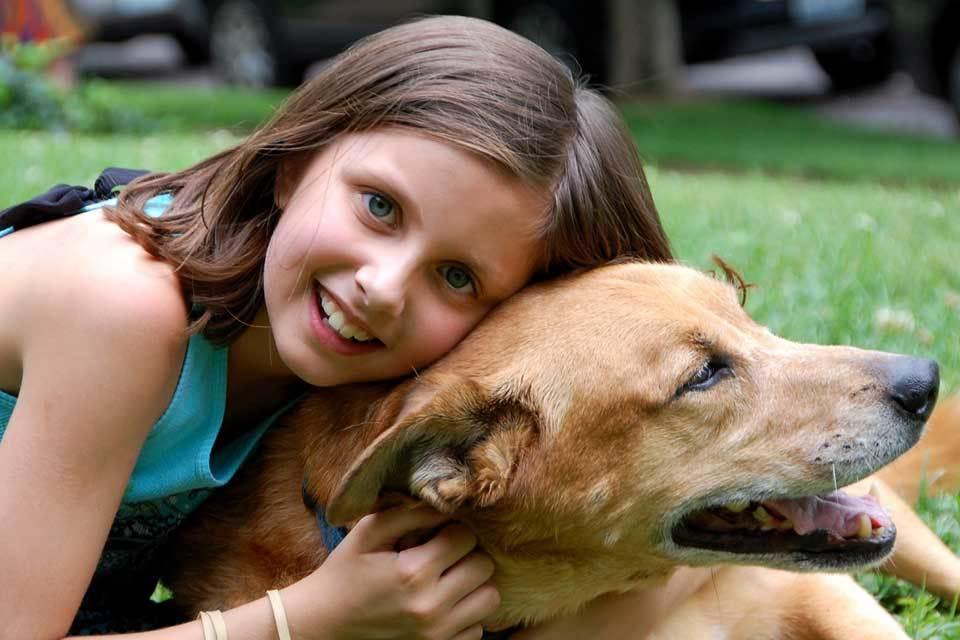 Come aprire un allevamento di cani: quanto costa e quanto si guadagna